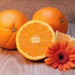 みかん・オレンジ・ポンカン・いよかんの違いとは