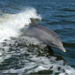 イルカとクジラは違う?