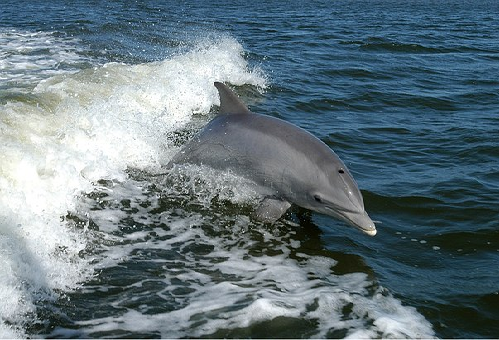 イルカ クジラ 違う