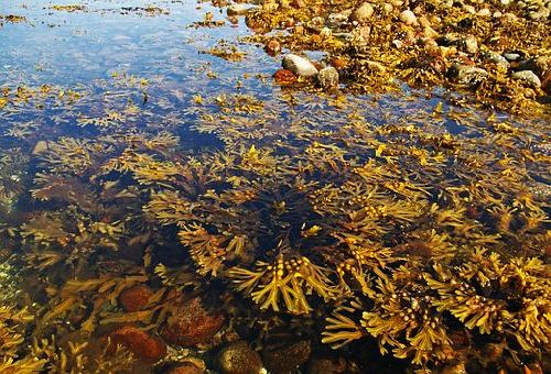 海藻 海草 違い