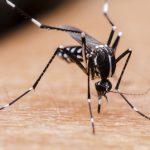 「ユスリカ」と「蚊」の違いについて!
