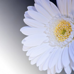 花と華の違い
