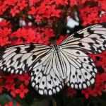 蝶と蛾に違いってあるの?