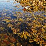 海藻と海草の違いとは?!